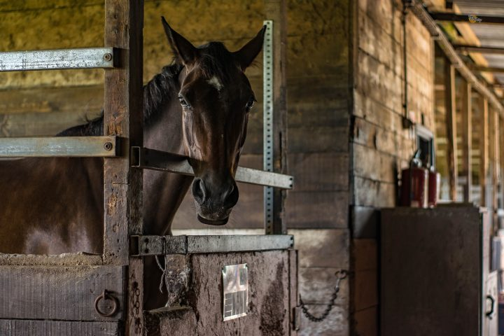 Horse stable and boarding facility