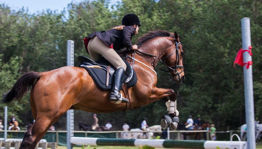 The 12 Best Ice Boots for Horses: Reviews & Guide 2020