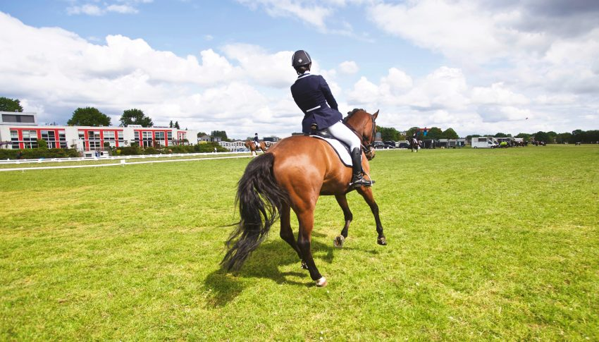 Setting Up Your Dressage Letters & Where to Get Them